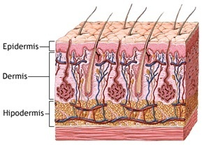 profundidad-micropigmentación-agujas